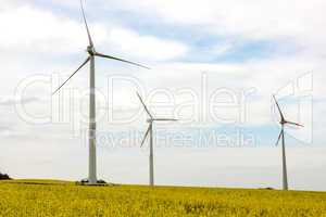 Canola field with wind turbine for energy