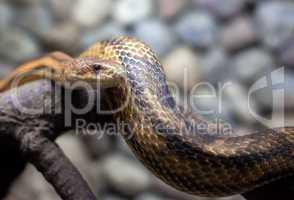 snake in city zoo