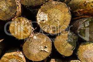 saw round timber