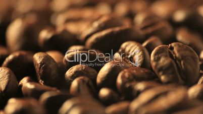 Coffee beans - DOLLY