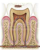 Principle of a cavity