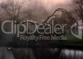 Eerie weeping willow tree in the fog
