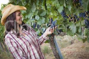 Young Adult Female Farmer Inspecting Grapes in Vineyard