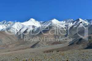 Indien, Ladakh, Gebirge am Pangong See