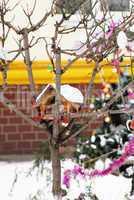 Birds house on tree