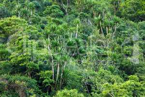 Tropical shore forest
