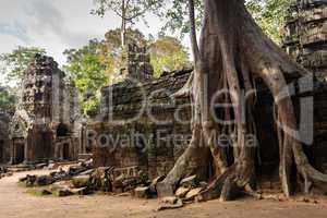 Angkor tree roots