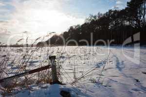 Wiese im Winter