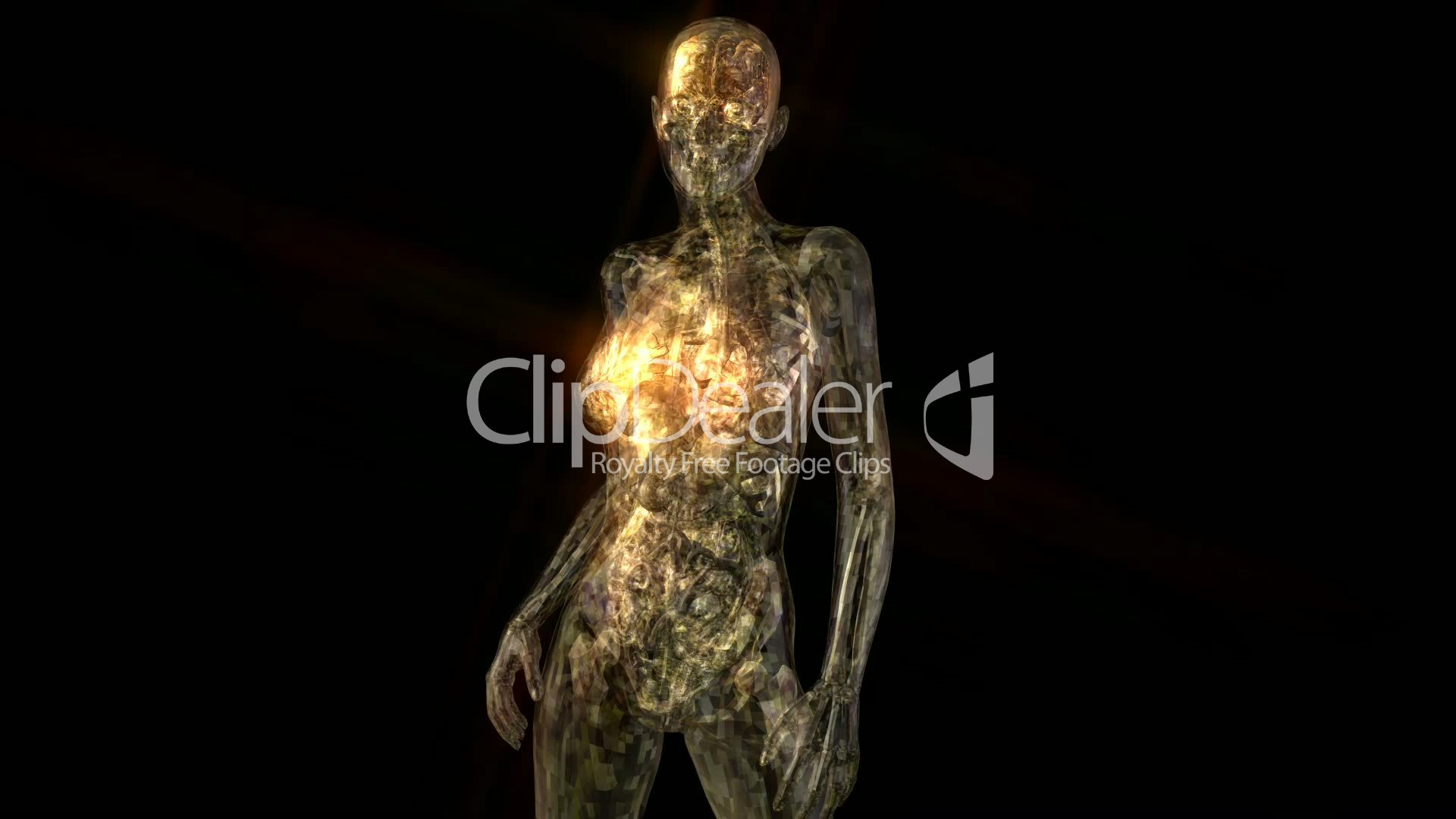 Human Anatomy Animation Royalty Free Video And Stock Footage