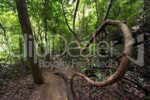 Inside dense jungle