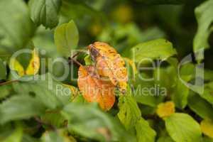Blätter verfärben sich