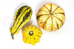 Zierkürbis, ornamental or decorative gourd