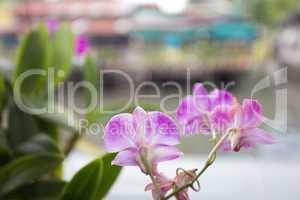 orchidée fleur