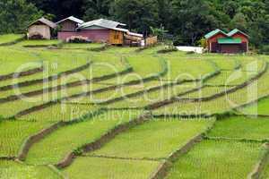 farm and terrace rice field