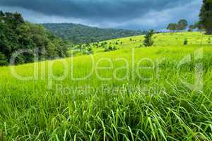 lush tropical meadow