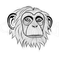 monkey chimpanzee head