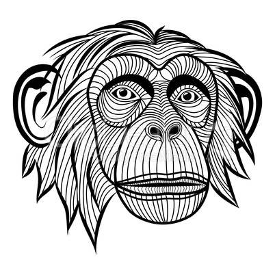 monkey chimpanzee head