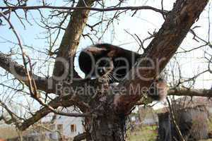 black cat climbing up the tree