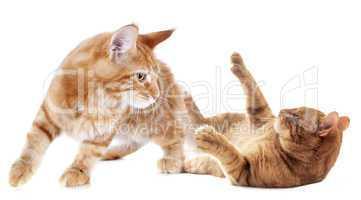 jeu chaton