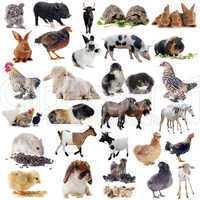 ferme animaux