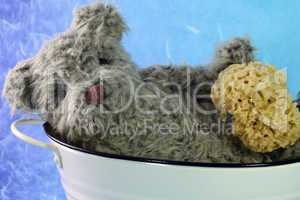 alter Teddy in einer Badewanne