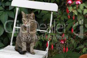Hauskatze auf einem Gartenstuhl