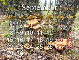 calendar for the september of 2014 on the background of mushrooms