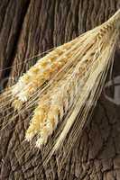 Büschel Getreideähren