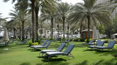 Sunbeds on the green lawn and palm trees in luxury hotel, Dubai, UAE
