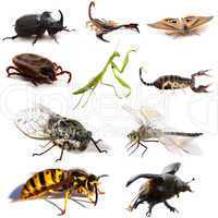 les insectes  to scorpions