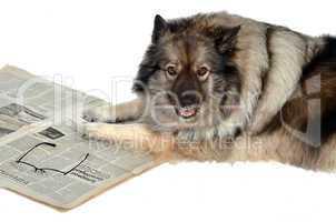 Tageszeitung News Aktuell Hund
