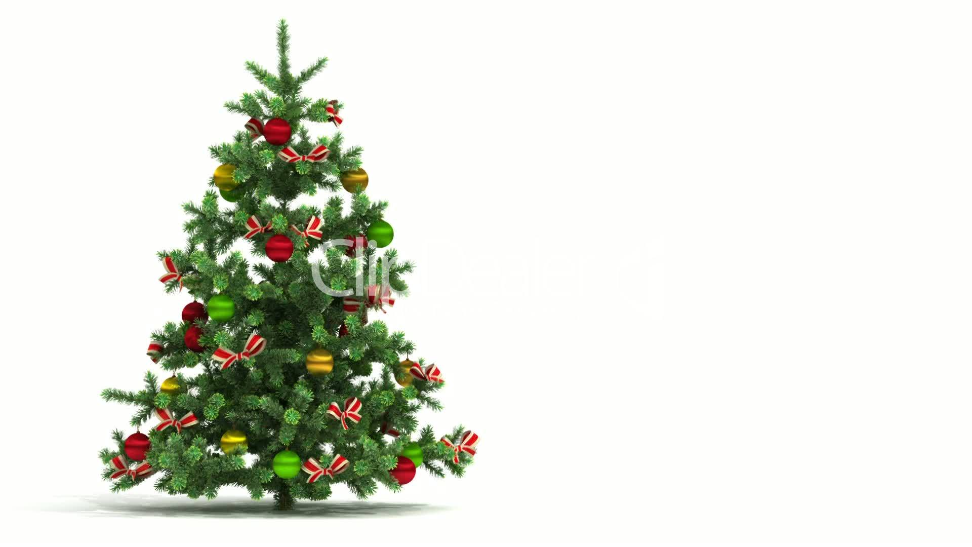 Beautiful Christmas tree looped on white background. First 250 ...