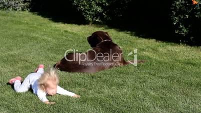Brown Labrador retriever and a girl