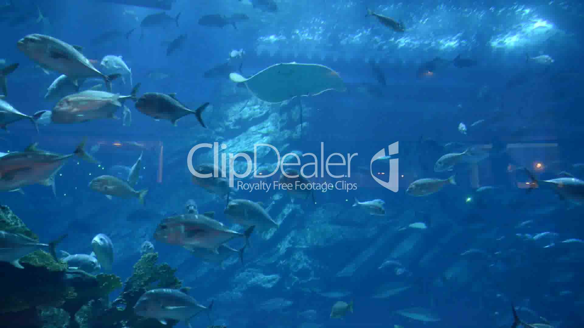 Fish aquarium in uae - Fish