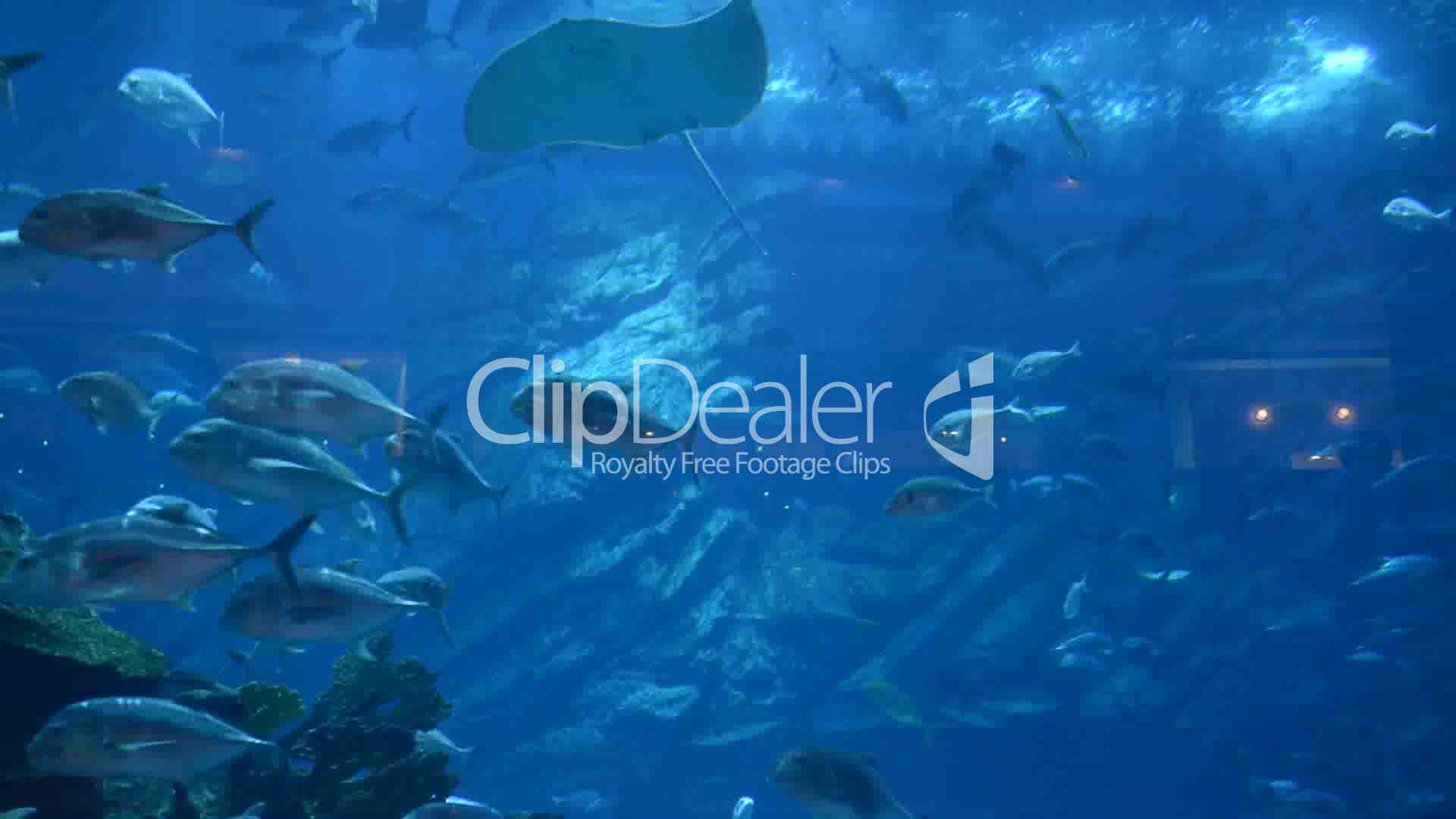 Fish aquarium in uae - Clips Ray And Fishes In The Aquarium