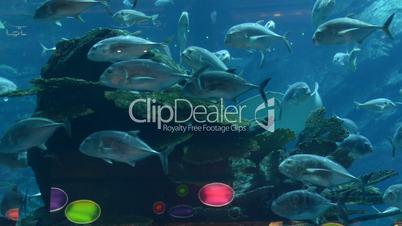 Rays, morays and fishes in the aquarium of Dubai Mall, Dubai, UAE