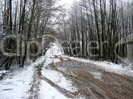 winter landscape in the forest with road