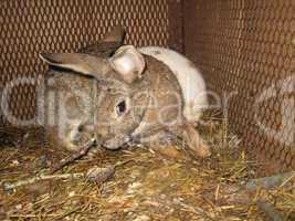 nice rabbit in the farm