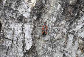 Bug on tree trunk