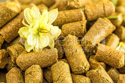 Hopfenpellets mit Hopfenblüte