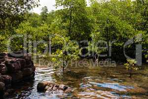 mangroven in thailand, mangroves in thailand