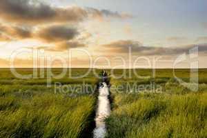 salt meadow during sunrise