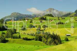fiss alm - fiss alp pasture 07
