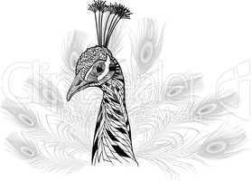 peacock bird head as symbol for mascot or emblem design