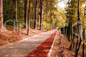 path in the forest with bike stripe
