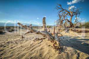 death valley dunes wood