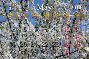 calendar for may of 2014 year with branch of blossoming cherry