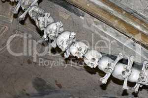 human bones.