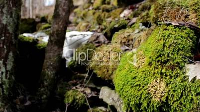 Tree stone covered in moss and some part still covered in snow