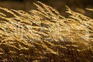 Beautiful grass field at sunset